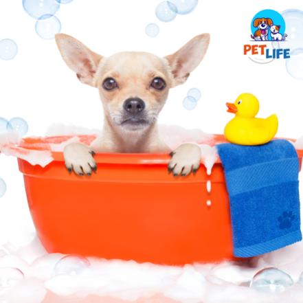 Banho p/ Animais de Pequeno Porte + Hidratação Intensa + Tosa Higiênica