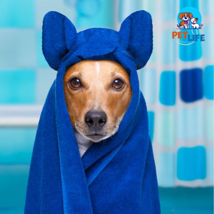 Banho p/ Animais de Porte Médio + Hidratação Intensa + Tosa Higiênica